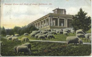 Sheep at Druid Hill Mansion House