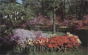 Flowers at Sherwood Gardens, c. 1960-1980s
